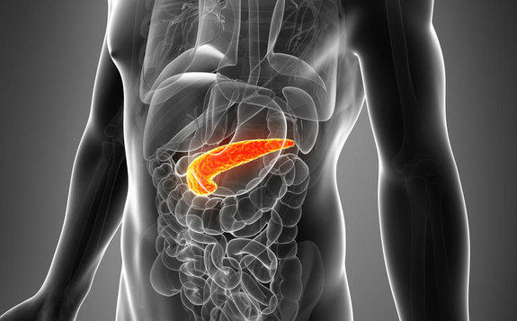 pancreas-generic-130723